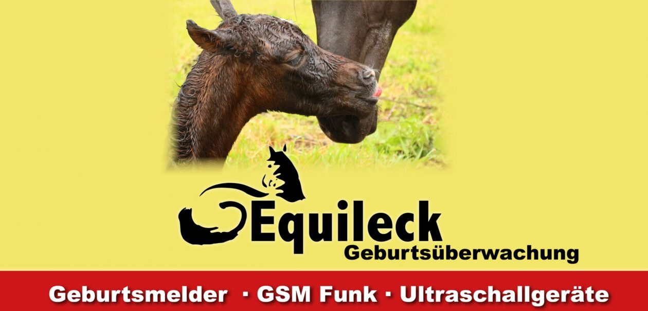 Equileck